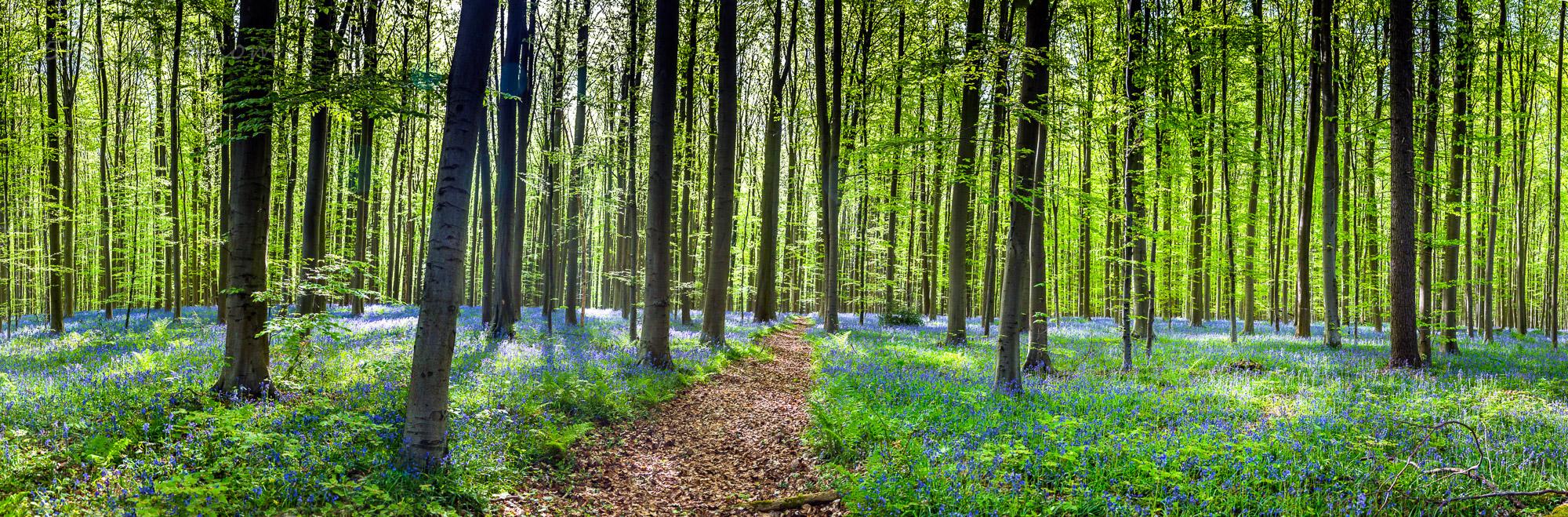 Waldweg im Hallerbos