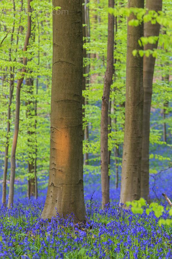 ein kleiner Sonnenstrahl schafft es noch durch den Wald