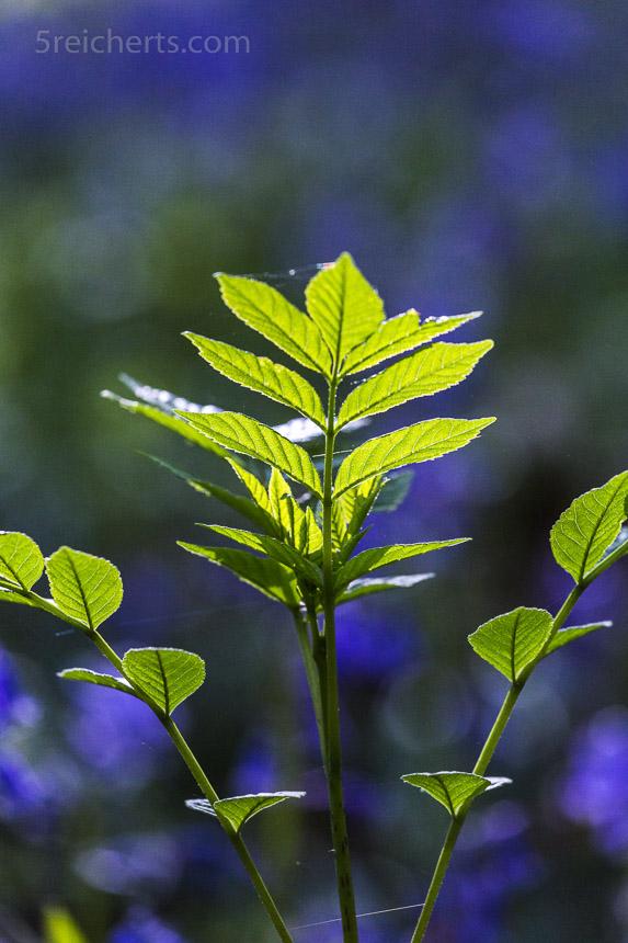 Frisches Grün - der Frühling kommt in großen Schritten