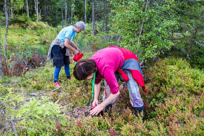 Gabi und Ulrike plücken Beeren