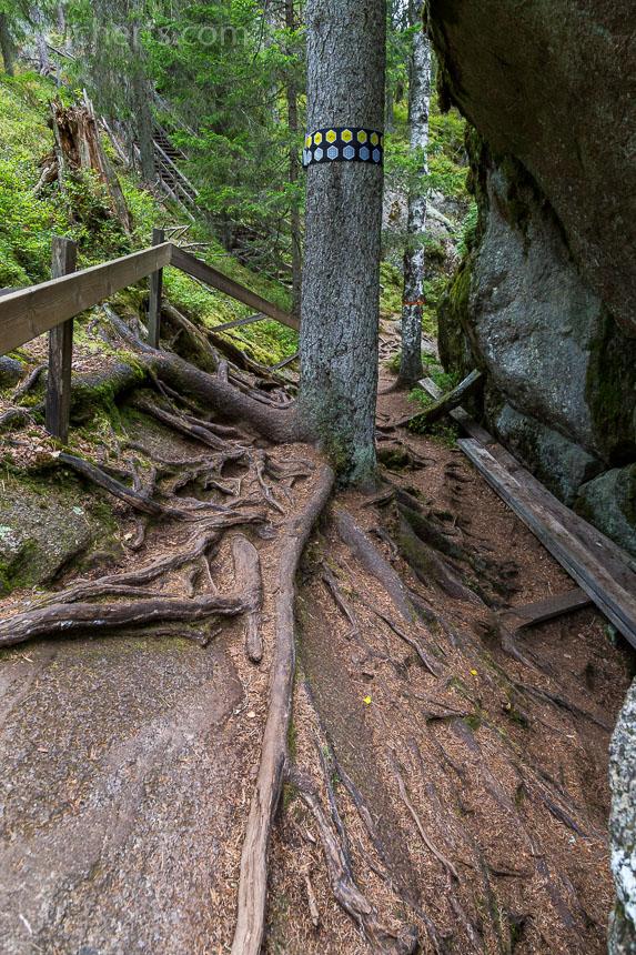 Der Wanderpfad über die Wurzeln der Bäume