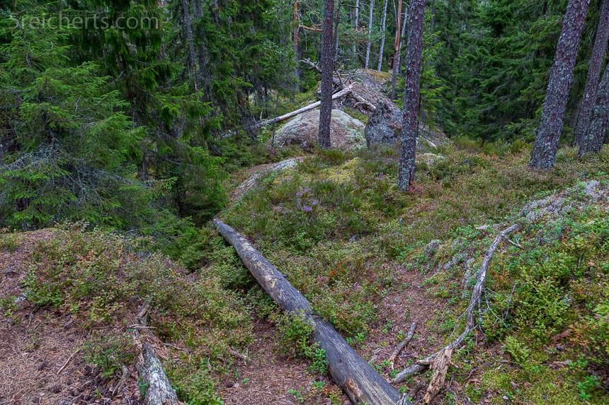 saftiges Grün im Naturschutzgebiet Tiveden