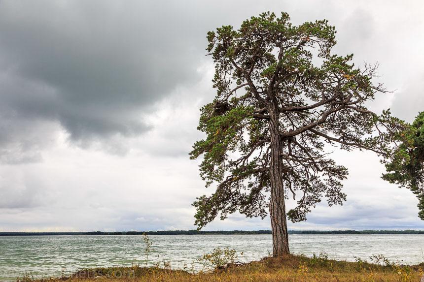 Ein Baum am See
