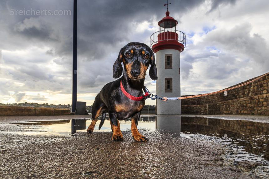 Der Hafenleuchtturm von Erquy mit Grindel
