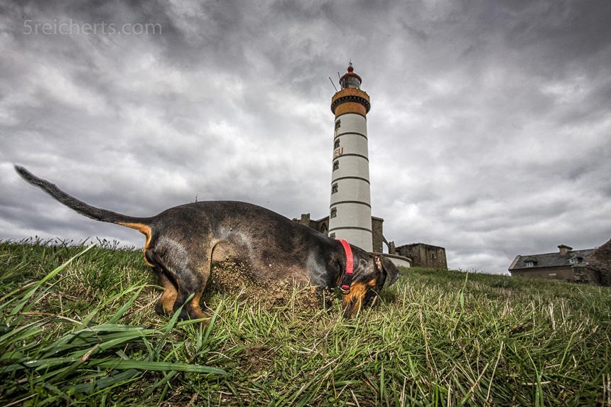 Es roch zu sehr nach Kaninchen am Leuchtturm St Mathieu, Bretagne
