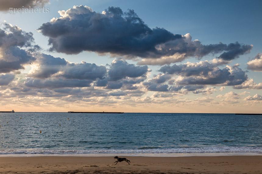 Ein Hund am hundefreien Strand