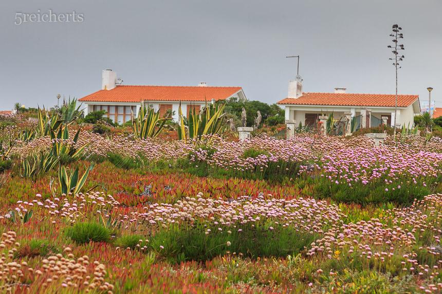 Strandgrasnelken und Häuser in Porto Covo