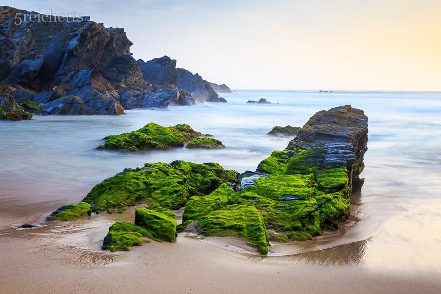 knallig grüne Algen auf den Felsen, Ebbe in Porto Covo