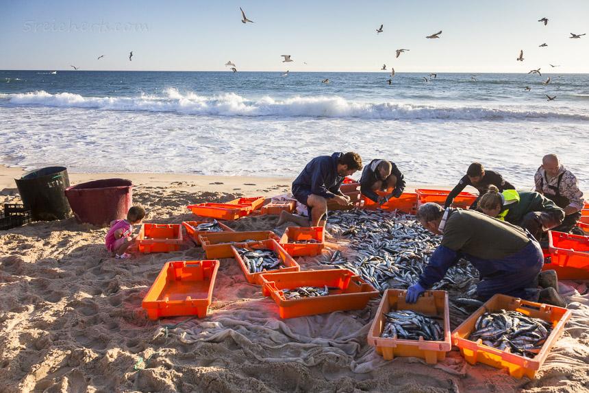 Sardinenfischer am Fonte de Telha, Portugal