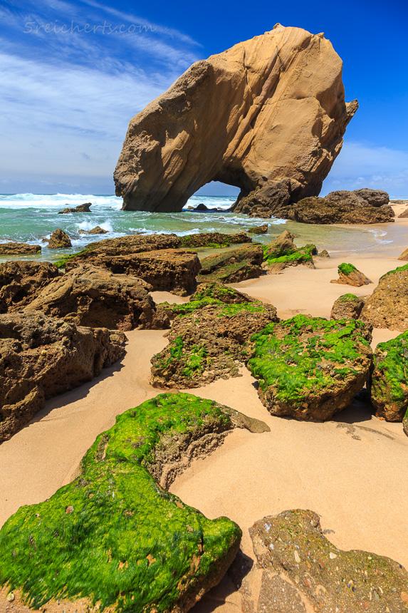 Algen auf den Felsen, Santa Cruz