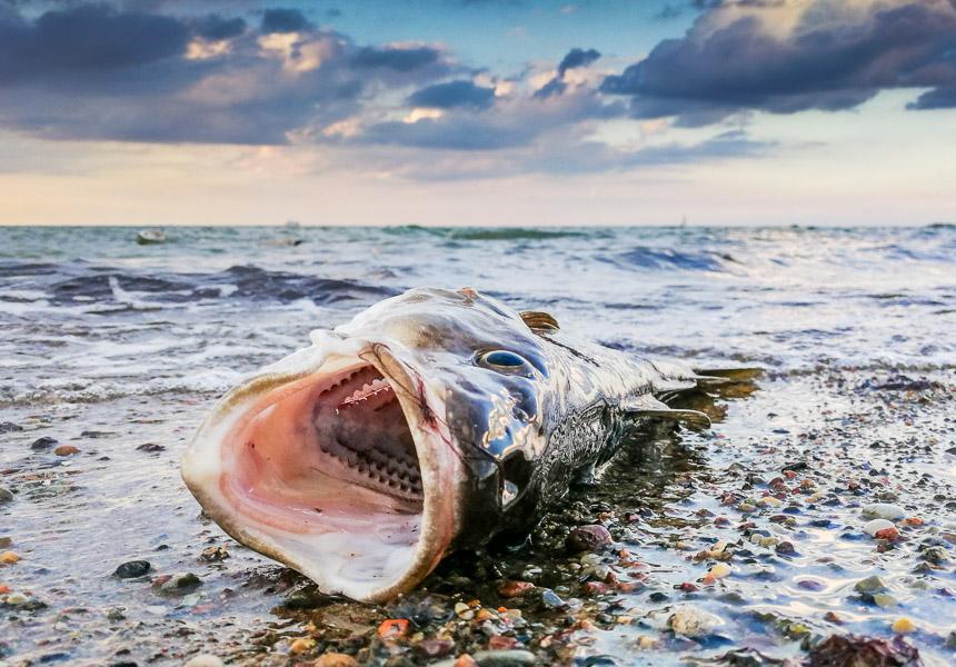 Fisch am Strand