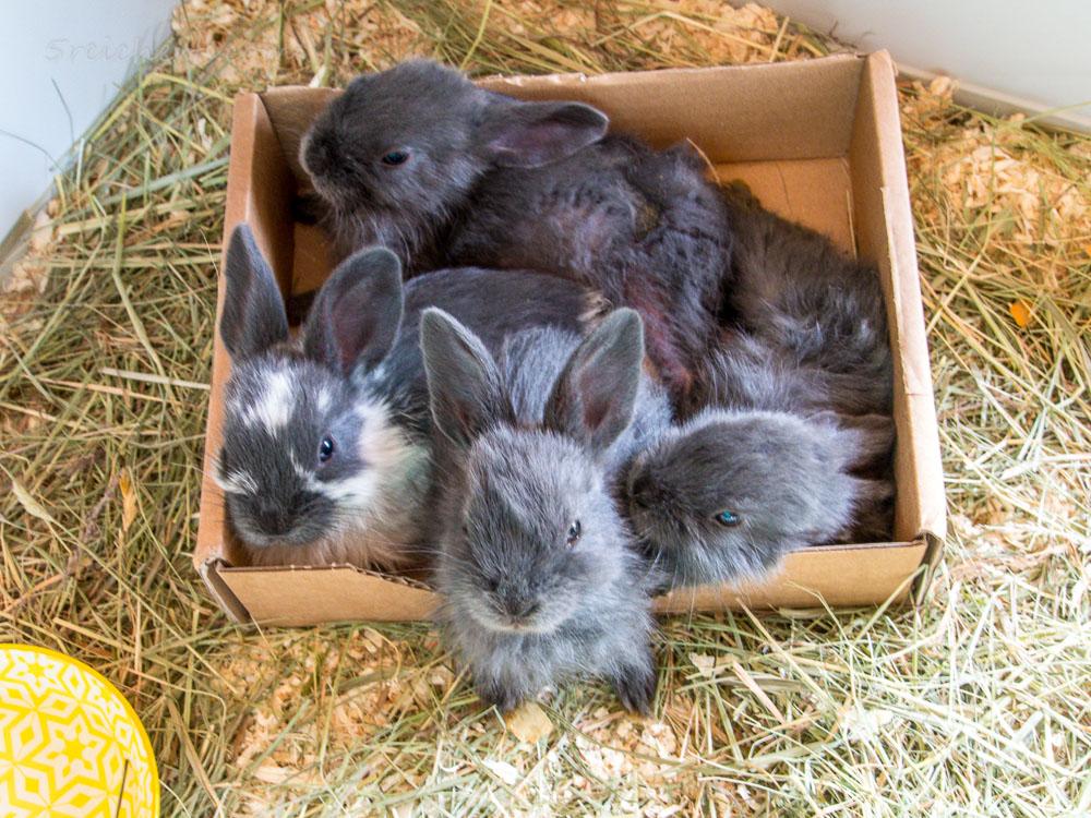 Alle in der kleinen Kiste