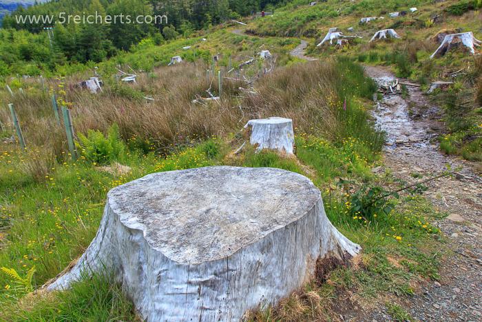 abgeholzter Wald bei den Victoria Fällen