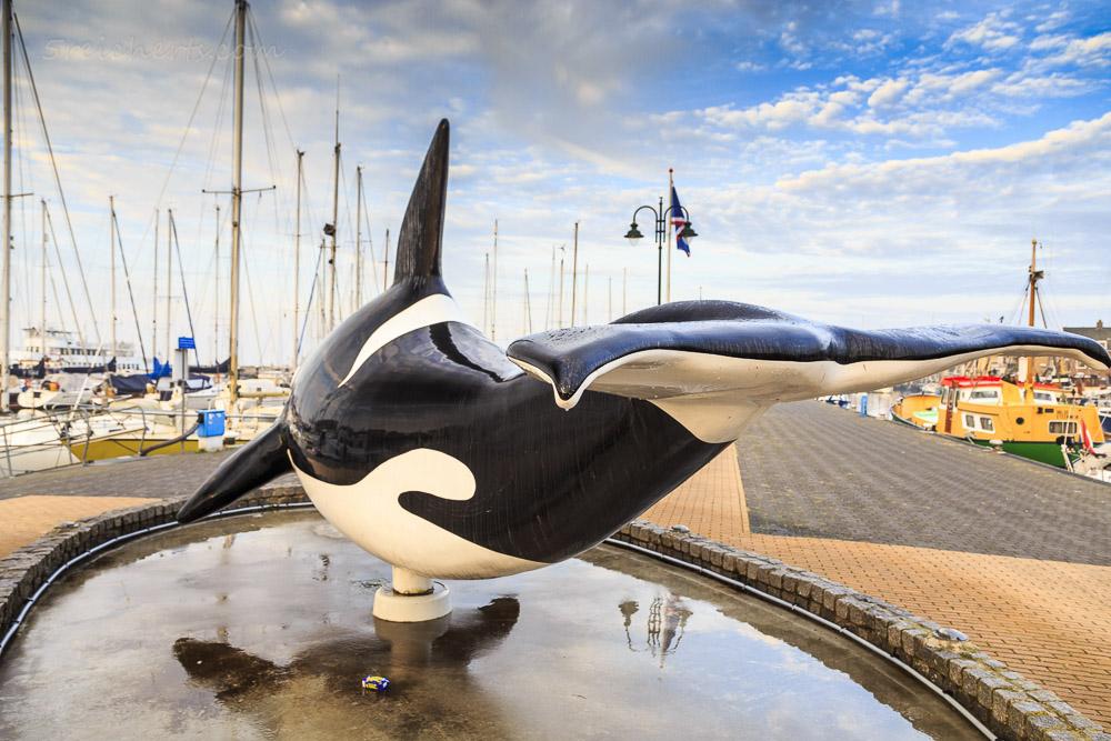 Orca im Hafen von Urk, Niederlande
