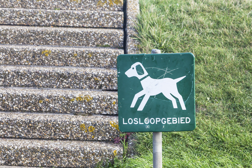 Hunde dürfen frei laufen