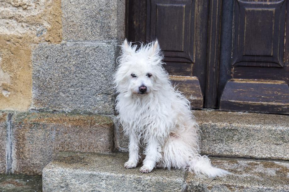 Ein Hund wartet geduldig vor der Kirche, Ile de Sein