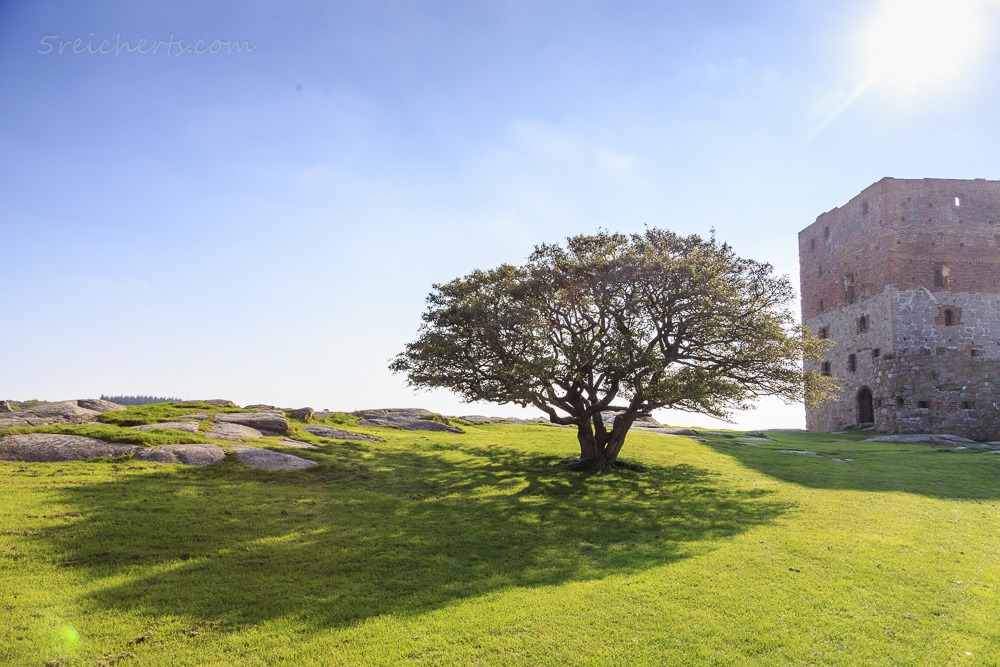Der Baum und sein Schatten, Hammerhus, Bornholm, Dänemark