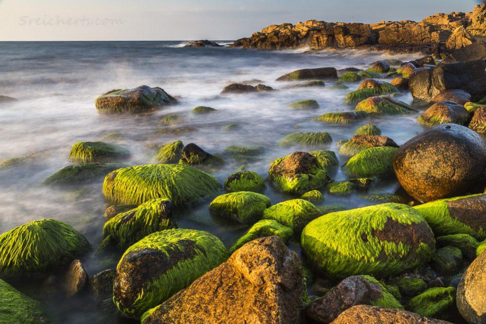 Moosbedeckte Felsen, Bornholm