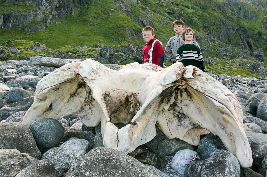 Reisetipp - Teil eines Pottwal Schädels, Eggum, Lofoten