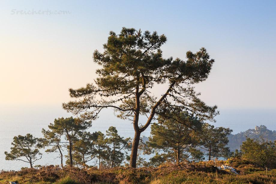 Küstenlandschaft, Cap de la Chevre, Bretagne