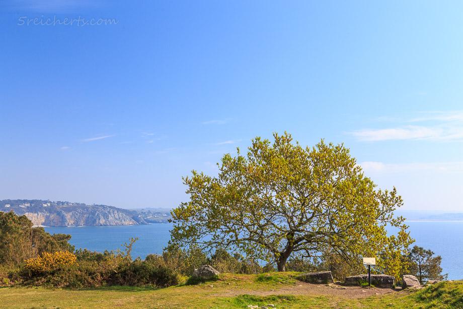Baum an der Küste, Morgat