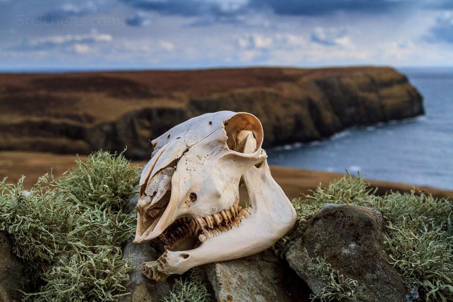 Schafschädel, Insel Bressay