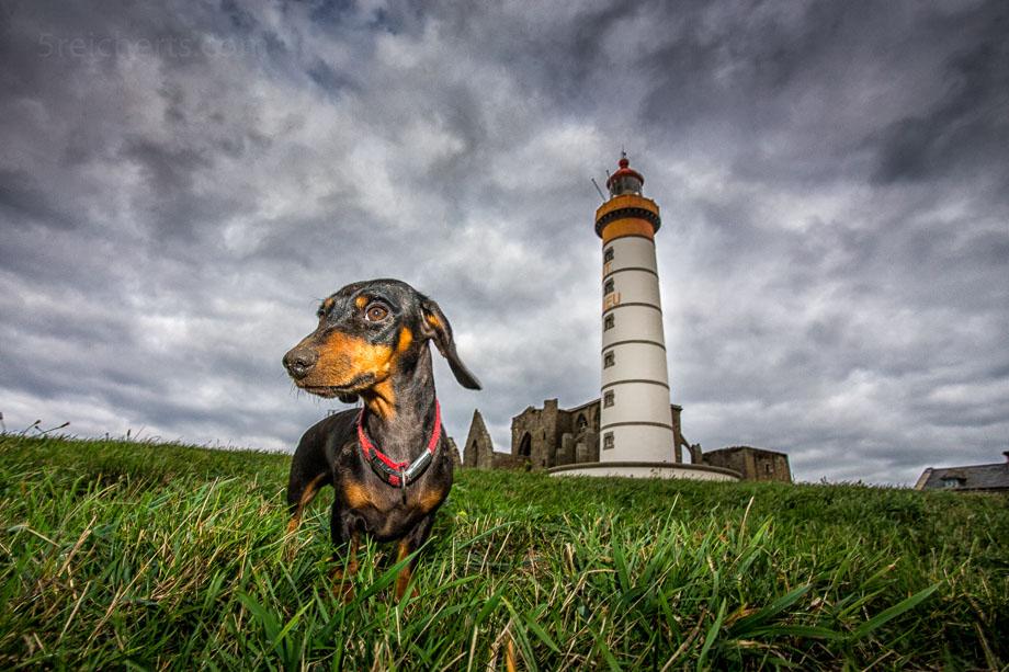 Dackel Grindel und der Leuchtturm Saint Mathieu, Bretagne