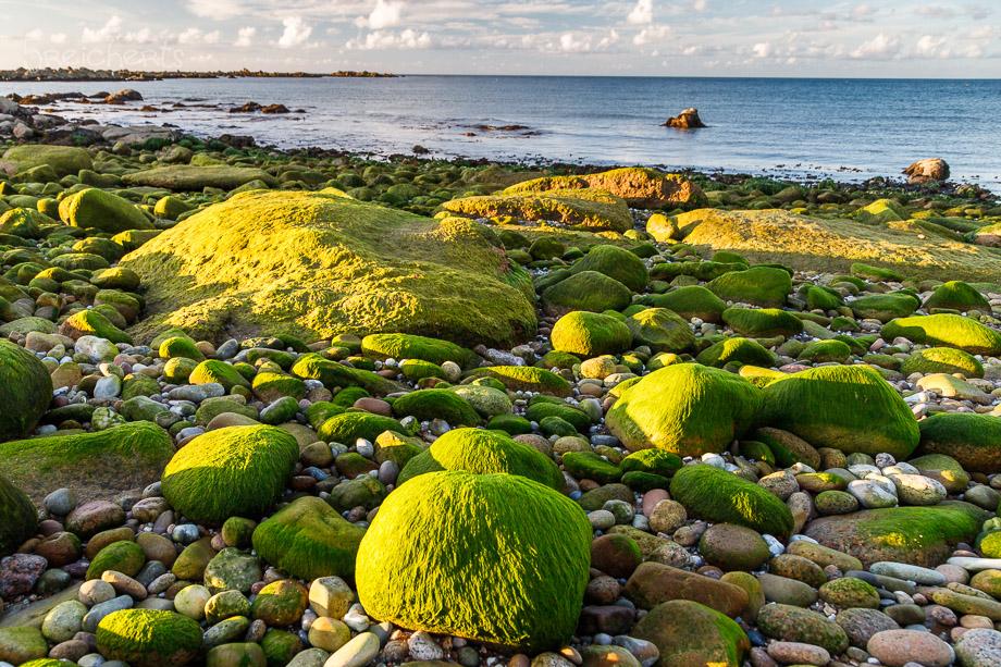 Algenbedeckte Felsen, Cap Levi, Normandie