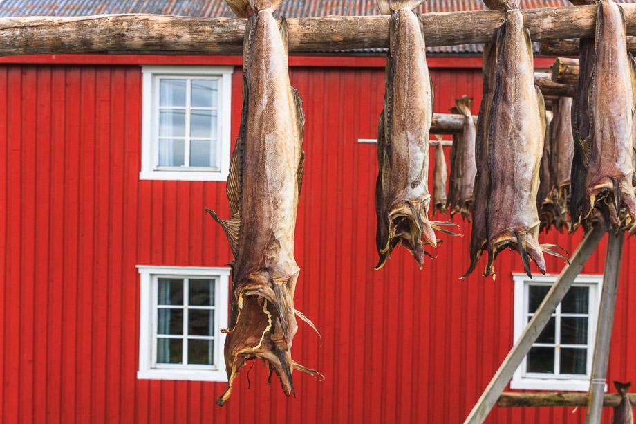 Stockfisch in Å, Norwegen