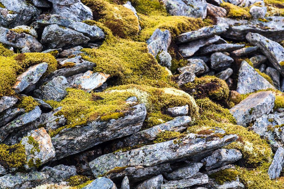 Das Adlerfanghaus ist perfekt getarnt, Vaeroy, Norwegen