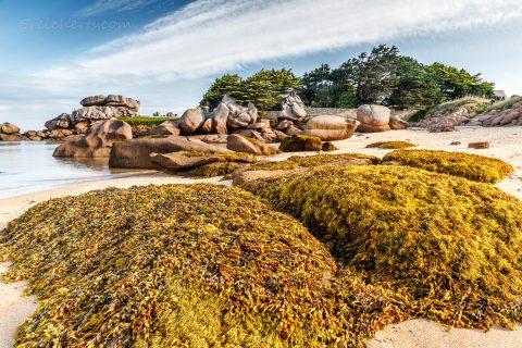 Ile de Renote, Cote de Granite Rose, Bretagne