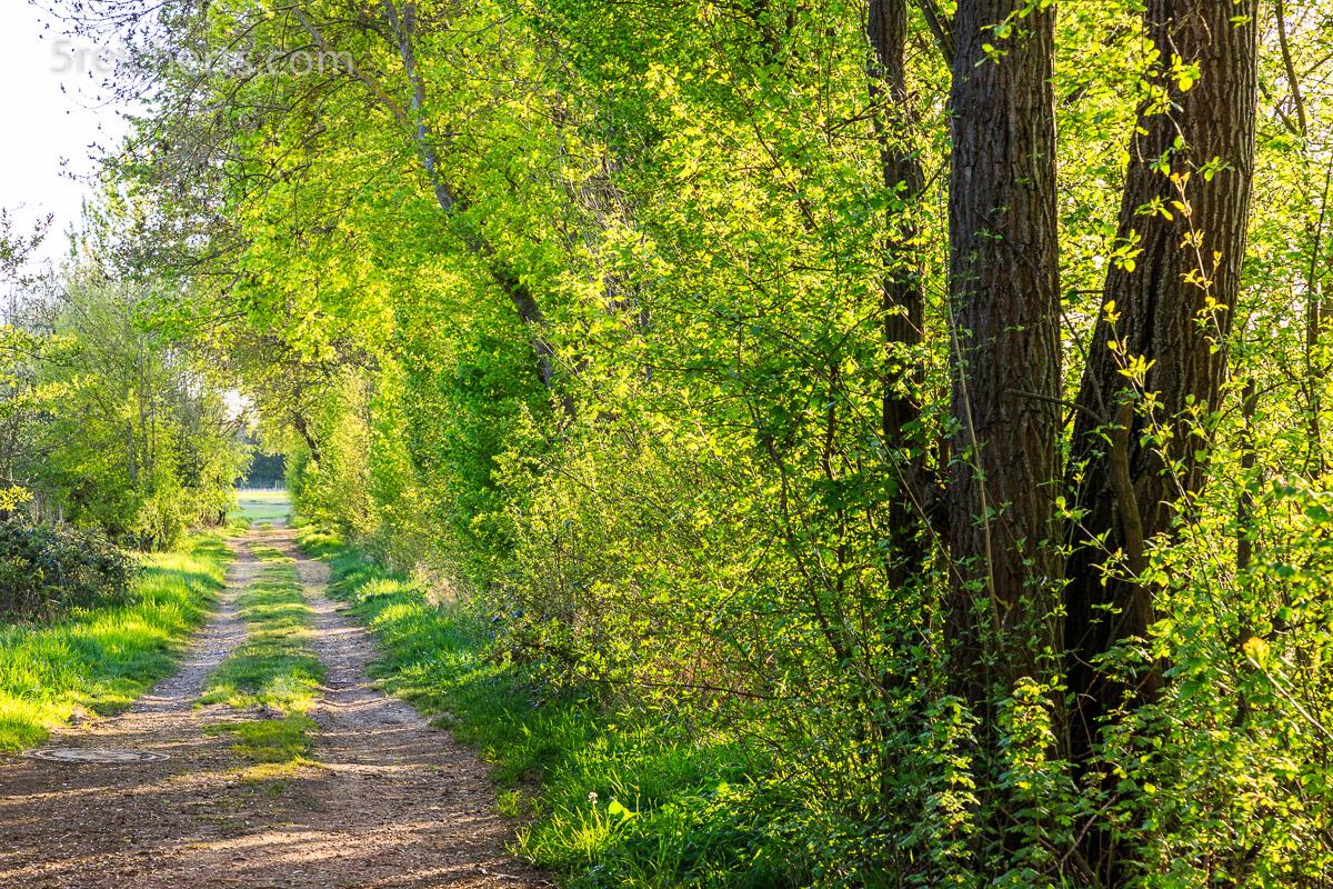 Frühlingsgrün am Wegesrand