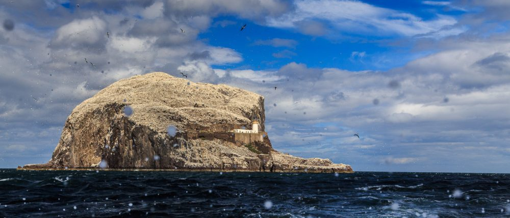 Leuchtturm und Basstölpel, Bass Rock, East Lothian, Schottland