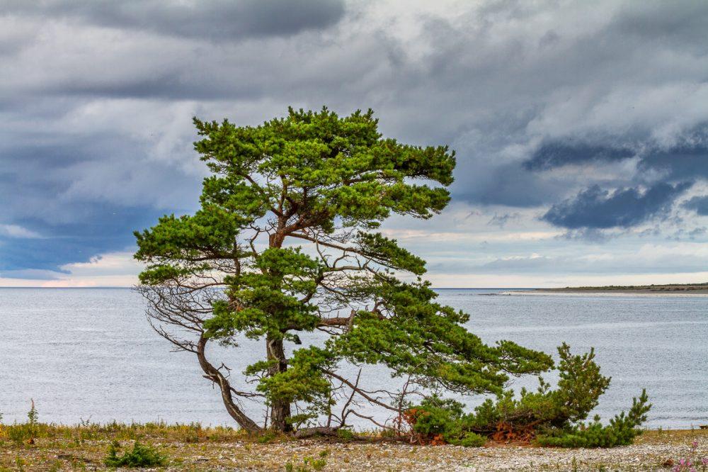 FåFårö, Gotland, Schwedenrö, Gotland, Schweden