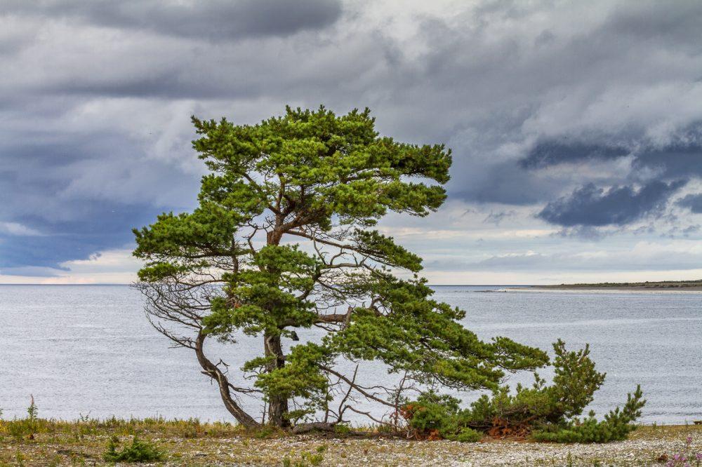 Fårö, Gotland, Schweden