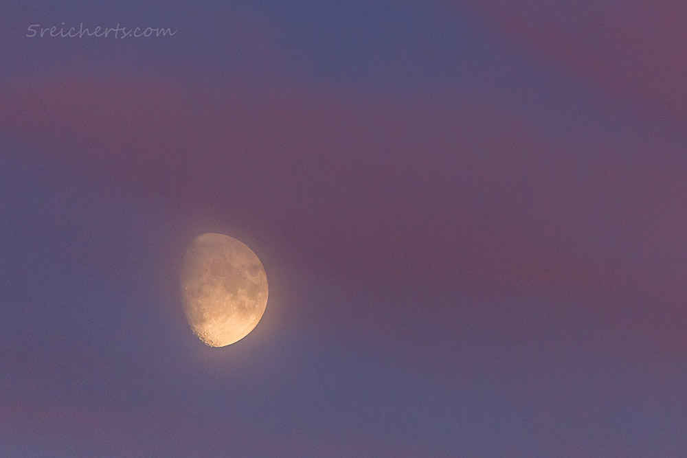Mond im Abenddunst