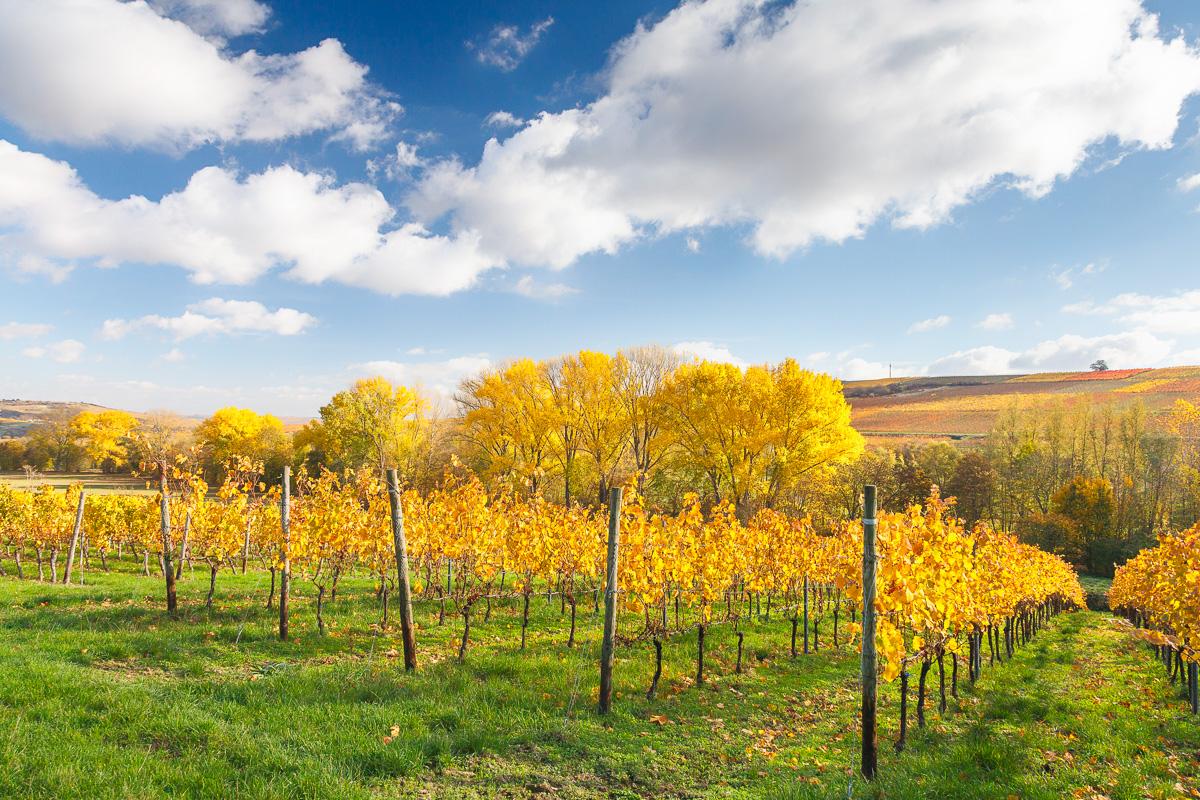 Herbstlandschaft, Selztal