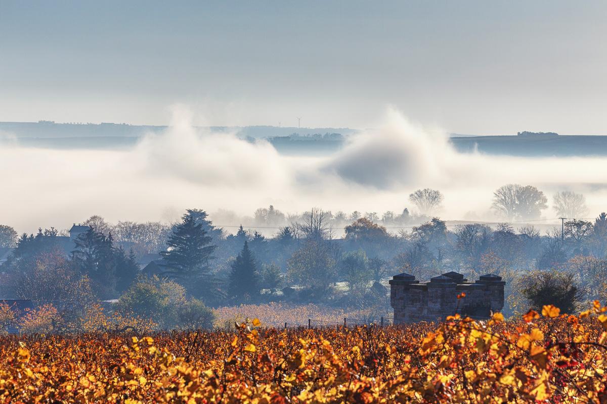 Morgennebel im Herbst, Bubenheim