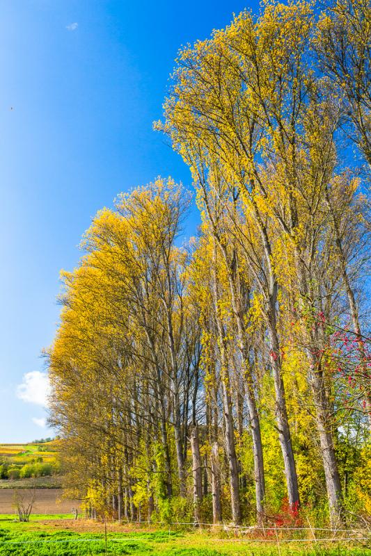 Weiden im Herbst