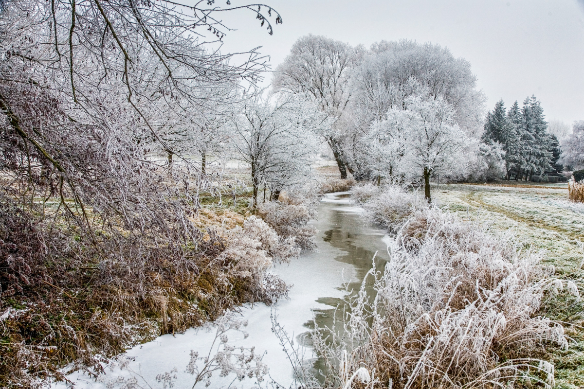 Selz im Winter
