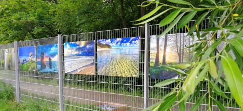 Naturfotos am Zaun des Gynmasiums